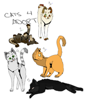 Cats For Adoption! ~ Closed by OtterPupp