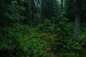 Rainy forest by mabuli