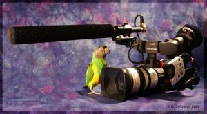 Senegal Parrot and Canon XL1s by Dreamspirit