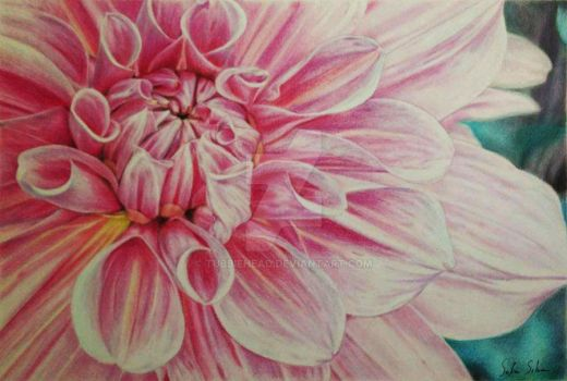 Blooming Flower in Colored Pencil by TubbieHead