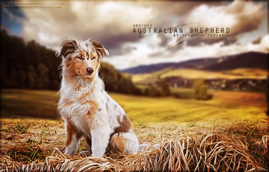 Australian Shepherds by Zephyr and Zodiaque by xxELUHFUNT