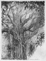 Strangler Fig by graemeb