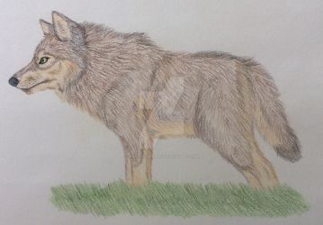 Doodling with Pencil Crayons by Wild-As-Wolves