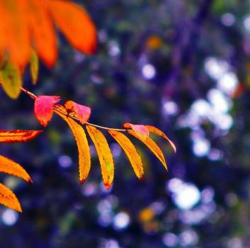 autumn bokeh by Iridescent-happinesS