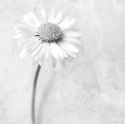 just like petals by libelle