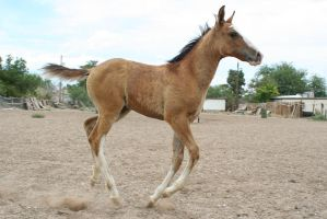 Foal 17 by Mustang4-Stock