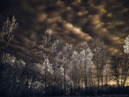 Light of the Setting Sun - 2 of 8 by KBeezie