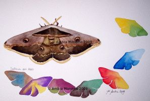Giant peacock moth by flysch