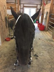 Show bridle stock 4 by Stripe13