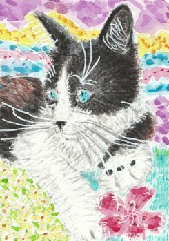 black white cat  watercolor painting aceo by tulipteardrops
