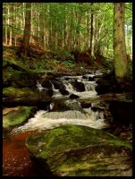 The Forest stream by Delillah