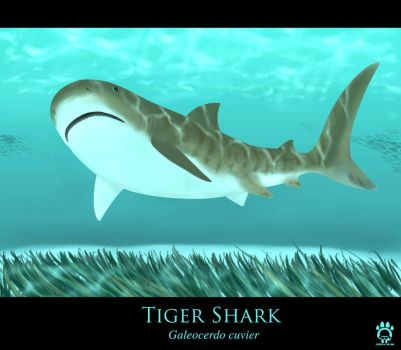 Tiger Shark by Cat-girl-aholic