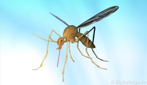 Mosquito 3D by digitalAuge