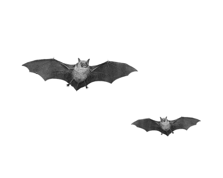 Png Bats by Moonglowlilly
