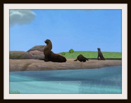 Seals or Sea Lions? by ProfDanB