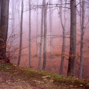 woods 1 by StetoCina