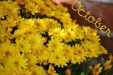 October Mums by LadyElisera