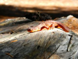 Newt Newt! by Quadrupedal