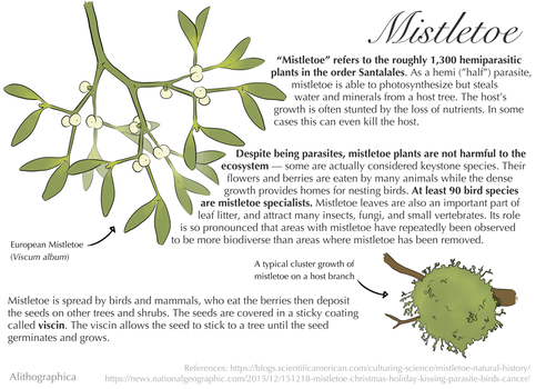 Science Fact Friday: Mistletoe by Alithographica