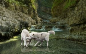 Playtime in the Creek by YellowDeer