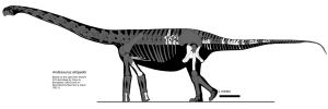 Andesaurus new version by palaeozoologist