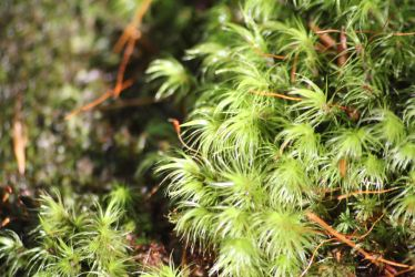 Moss by Irie-Stock