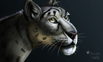 Snow Leopard by CalebP1716