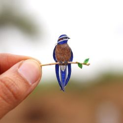 Whiskered Treeswift - Paper cut birds by NVillustration