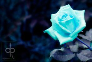 aint a blue rose by januscastrence