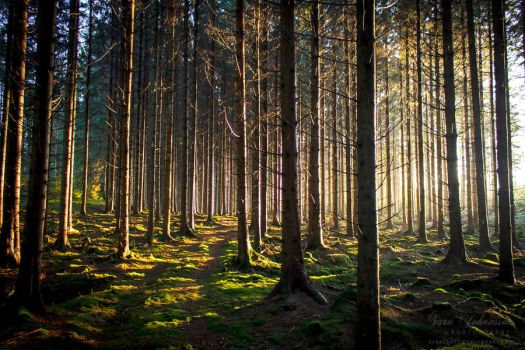 Enchanted Forest III by SaraJArts