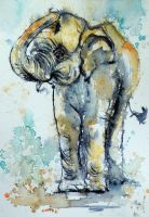 Elephant in gold by kovacsannabrigitta