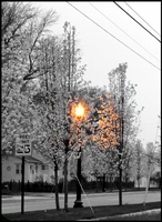 Lamp Post by AaronMk