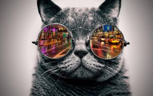 Cool Cat: City by ToValhalla