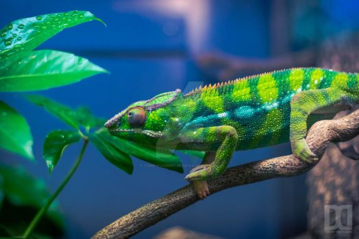 Colorful Chameleon by ToneyHadnotJr