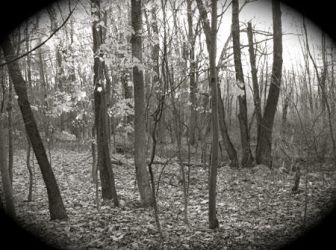 Worcester Woods 6 by scarygirl67
