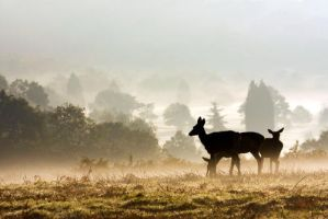Deers in Richmond Park, London by gregbajor