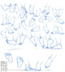 Anatomy - Human Feet by Quarter-Virus
