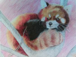 Red Panda by CaptainPinsel