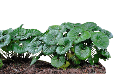 Clear Cut PNG Plant by Gareng92