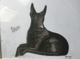 Niva (dog) Charcoal  by VliegendeFiets