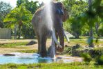 Cooling down Elephant  by Life-in-Alaska