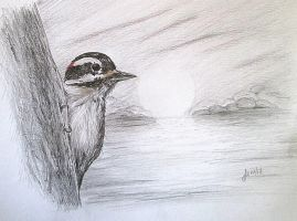 Hairy Woodpecker by Alena-48