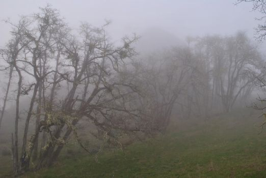 Enveloped Through Mist and Boughs IV. by swampliquor