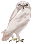White Burrowing Owl by TokoTime