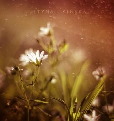 May Flower by Justine1985