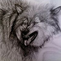 Angry Wolf by KoKino-Art