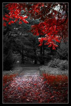 the autumn is here II by Tsapo