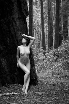 Ckudos - Redwoods by ImpressionofLight