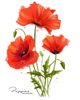 My flowers Poppies watercolor painting by Kajenna