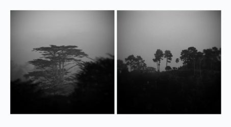 untitled (fog trees) by filmnoirphotos